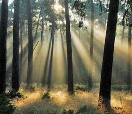 sunlight-trees